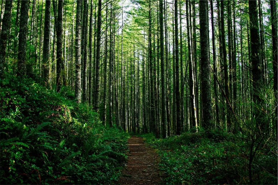 trees-698456_960_720