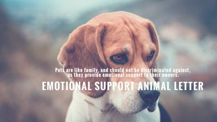 emotional-support-animal-letter